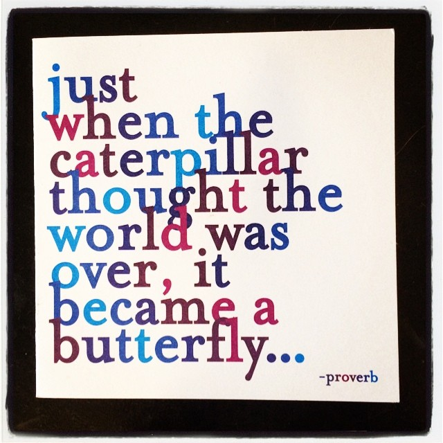 butterfly-quote-life